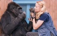 Koko & Kitten & Patterson