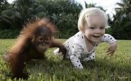 orangutan_baby_human_baby