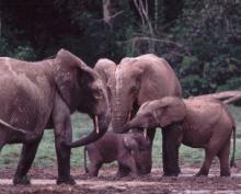 forestelephantfamilykatypayne