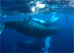 humpbackwhaleskatypayne